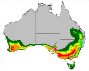 O. vacca predicted distribution in Australia