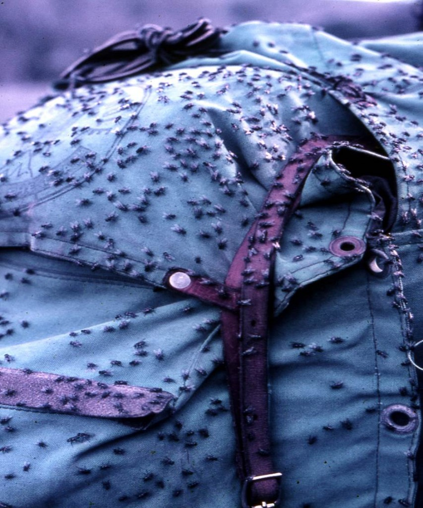 Bushflies on backpack