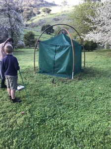 Spring beetle rearing tent, Victoria